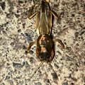 近所で見かけた謎の昆虫 - 2