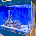 名古屋港水族館AQUA LIVE in ミッドランドスクエア 2018 - 14:カクレクマノミとナンヨウハギ