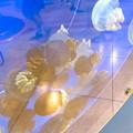 写真: 名古屋港水族館AQUA LIVE in ミッドランドスクエア 2018 - 20:カラージェリーフィッシュ