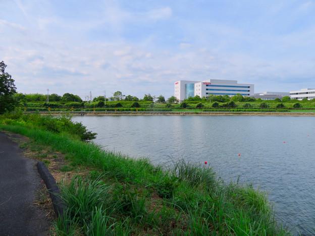 愛知池 No - 12