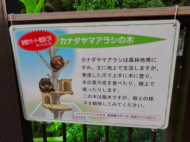 東山動植物園ナイトZoo 2018 No - 30:カナダヤマアラシの説明