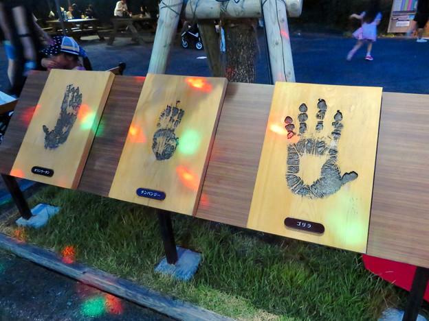 東山動植物園ナイトZoo 2018 No - 39:人間と同じヒト科に属する動物たちの手形