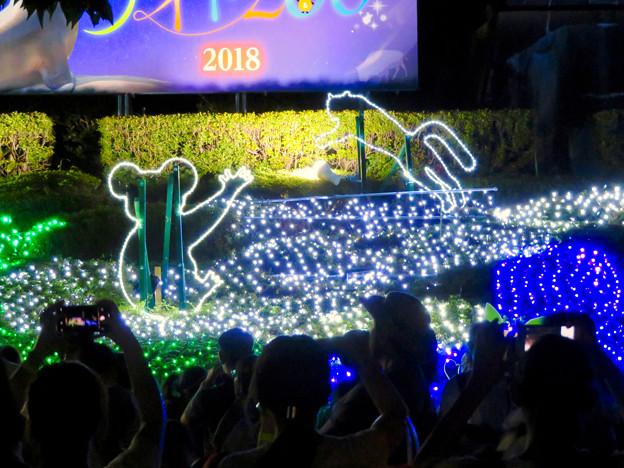東山動植物園ナイトZoo 2018 No - 66:コアラとネコ科動物のイルミネーション