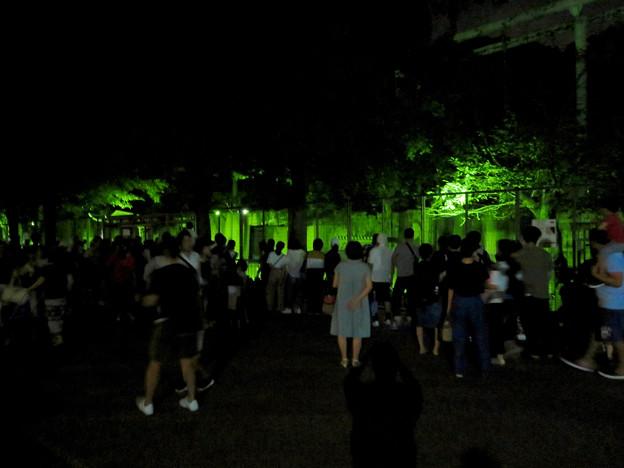 東山動植物園ナイトZoo 2018 No - 70:アカカンガルー舎の周りにいた人たち
