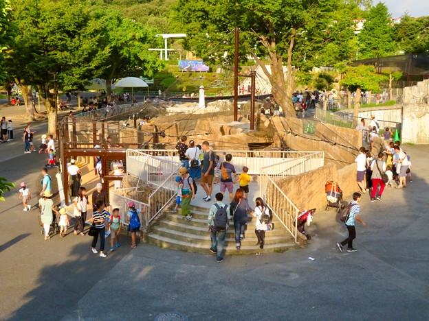 東山動植物園 2018年8月 No - 17:覆いや見学ゾーンができたペンギン舎