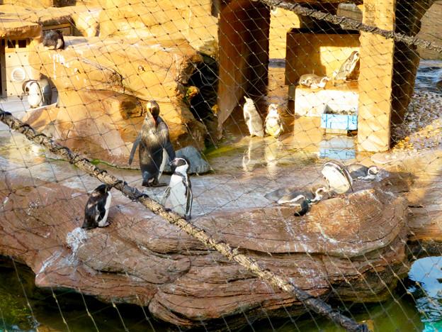 東山動植物園 2018年8月 No - 20:覆いや見学ゾーンができたペンギン舎
