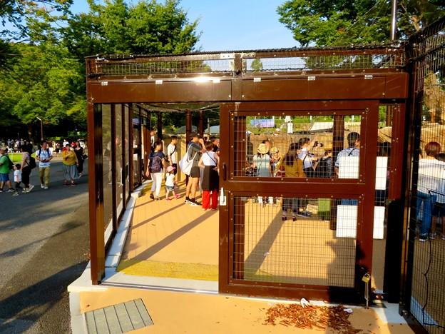 東山動植物園 2018年8月 No - 21:覆いや見学ゾーンができたペンギン舎