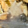 写真: 東山動植物園 2018年8月 No - 24:冷却ミストの真下でじっとしていたフンボルトペンギンたち
