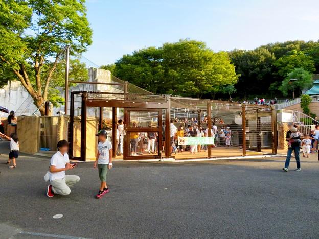 東山動植物園 2018年8月 No - 25:覆いや見学ゾーンができたペンギン舎