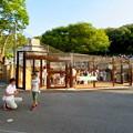 写真: 東山動植物園 2018年8月 No - 25:覆いや見学ゾーンができたペンギン舎