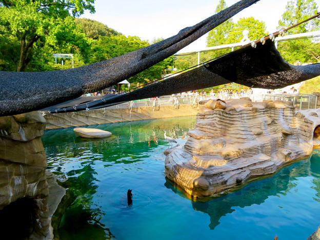 東山動植物園 2018年8月 No - 28:覆いが付いてたアシカ舎