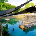 写真: 東山動植物園 2018年8月 No - 28:覆いが付いてたアシカ舎