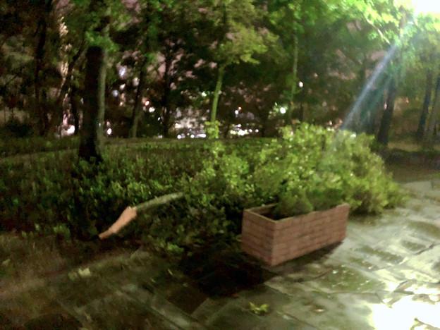 台風21号:強風の影響で折れていた桃花台中央公園の木