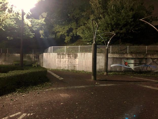 台風21号:強風の影響で沢山の葉っぱや枝が落ちていた桃花台中央公園 - 1