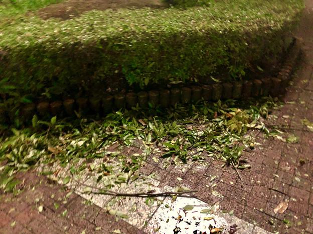 台風21号:強風の影響で沢山の葉っぱや枝が落ちていた桃花台中央公園 - 2
