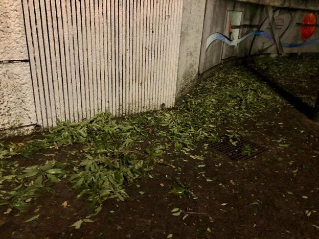 台風21号:強風の影響で沢山の葉っぱや枝が落ちていた桃花台中央公園 - 3