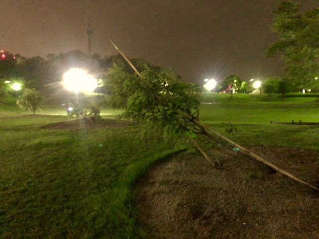 台風21号:強風の影響で倒れていた桃花台中央公園の木 - 1