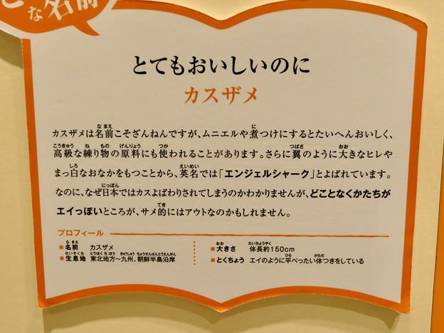ざんねんないきもの展 2018 No - 91:カスザメの説明