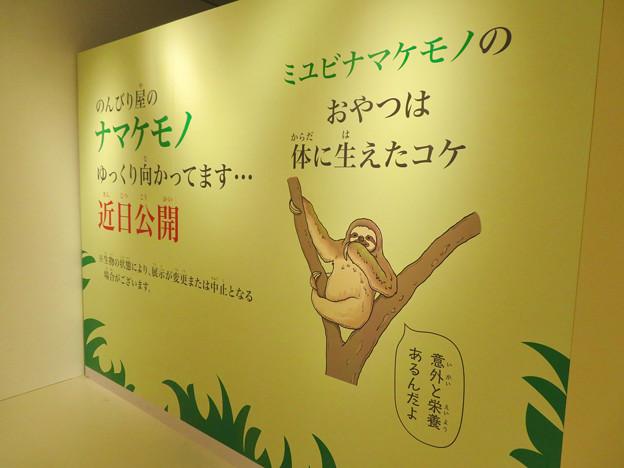ざんねんないきもの展 2018 No - 120:近日公開予定のナマケモノ(ミユビナマケモノ)の紹介