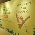 Photos: ざんねんないきもの展 2018 No - 120:近日公開予定のナマケモノ(ミユビナマケモノ)の紹介