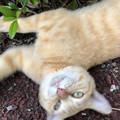 リンネレンズ:猫の種類判別するも「猫」としか表示されず… - 2