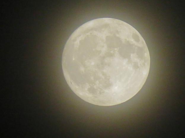 落合公園から見た薄曇りの中秋の満月(2018年9月24日) - 4
