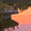 写真: 鮮やかな夕焼けの日、池のふちに佇むアオサギ - 1
