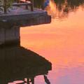 写真: 鮮やかな夕焼けの日、池のふちに佇むアオサギ - 2