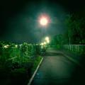 Photos: SX730 HS:トイカメラ風で撮影した夜の街灯 - 2