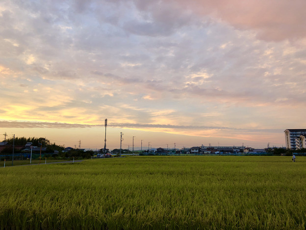 夕暮れ時の田んぼと田んぼ沿いの携帯基地局や電信柱 - 1