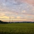 写真: 夕暮れ時の田んぼと田んぼ沿いの携帯基地局や電信柱 - 1