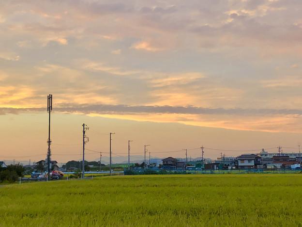 夕暮れ時の田んぼと田んぼ沿いの携帯基地局や電信柱 - 2