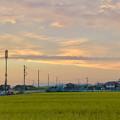 写真: 夕暮れ時の田んぼと田んぼ沿いの携帯基地局や電信柱 - 2