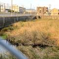 JR中央線横の堀ノ内1号調整池 - 3