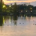 写真: 夕暮れ時の落合池 - 2