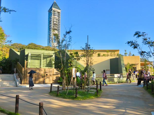 東山動植物園:新ゴリラ・チンパンジー舎 - 1
