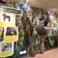 Photos: 東山動植物園:新ゴリラ・チンパンジー舎 - 10(ゴリラの体)