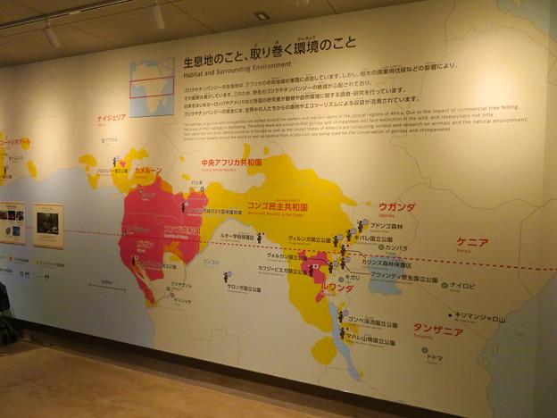 東山動植物園:新ゴリラ・チンパンジー舎 - 20(チンパンジーの生息環境)