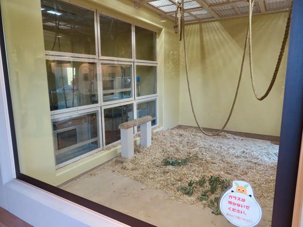 東山動植物園:新ゴリラ・チンパンジー舎 - 29(チンパンジー舎の個室?)