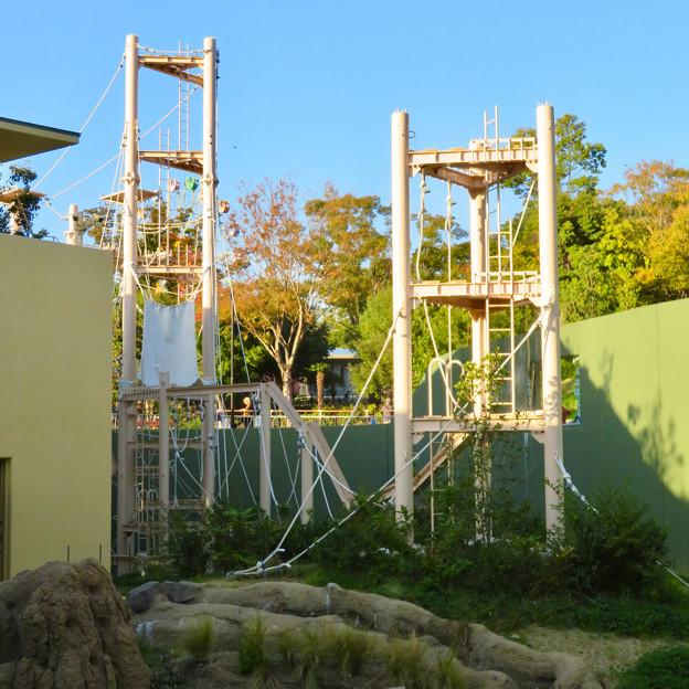 東山動植物園:新ゴリラ・チンパンジー舎 - 31