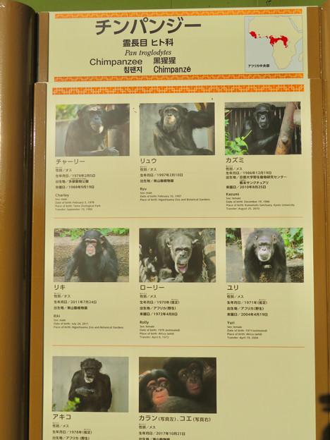 東山動植物園:新ゴリラ・チンパンジー舎 - 32(チンパンジーの名前)