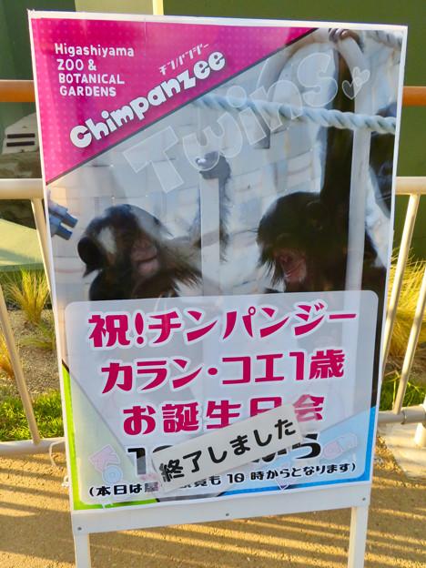 東山動植物園:新ゴリラ・チンパンジー舎 - 33(チンパンジーの誕生会案内)