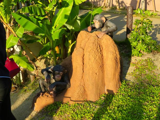 東山動植物園:新ゴリラ・チンパンジー舎 - 37(チンパンジーの像)