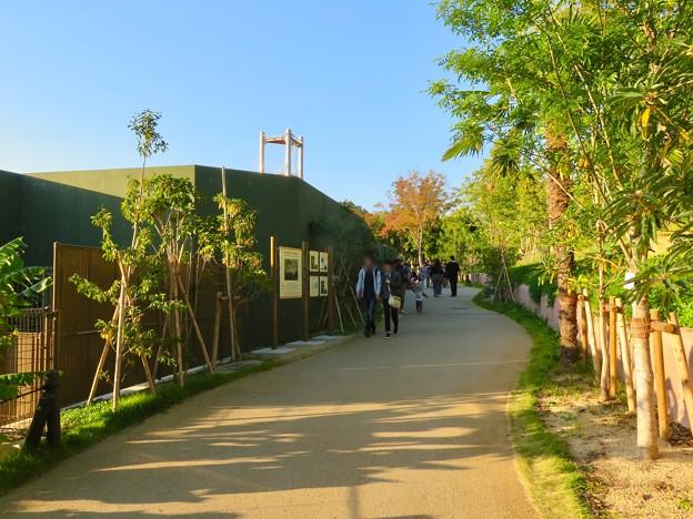 東山動植物園:新ゴリラ・チンパンジー舎 - 38(獣舎横の道)