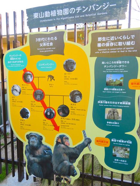 東山動植物園:新ゴリラ・チンパンジー舎 - 50(チンパンジーの解説)