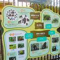 Photos: 東山動植物園:新ゴリラ・チンパンジー舎 - 51(チンパンジーの生活と行動)