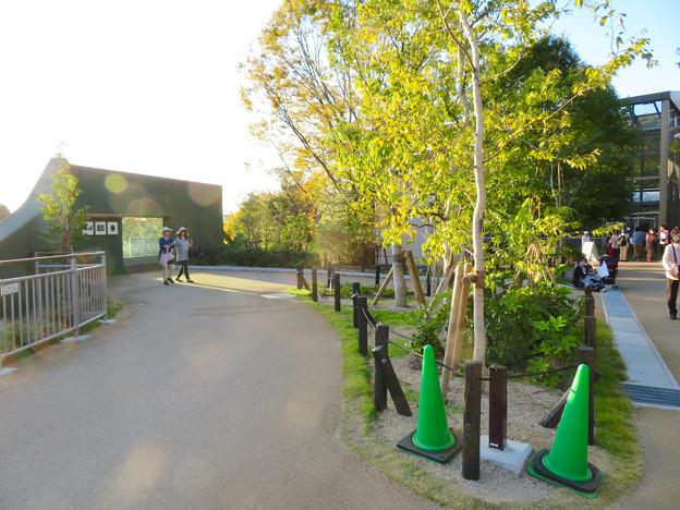東山動植物園:新ゴリラ・チンパンジー舎 - 56