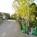 Photos: 東山動植物園:新ゴリラ・チンパンジー舎 - 56