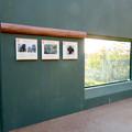 Photos: 東山動植物園:新ゴリラ・チンパンジー舎 - 57(観察窓)