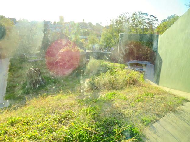 東山動植物園:新ゴリラ・チンパンジー舎 - 59(観察窓から見た景色)